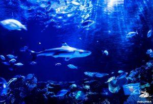 acuario-inbursa-CDMX-actividades