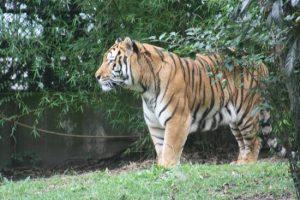 parque-zoologico-de-chapultepe-razones-para-visitar-ciudad-de-mexico